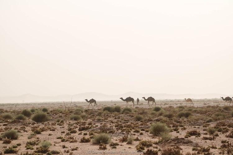 désert sahara erg chegaga