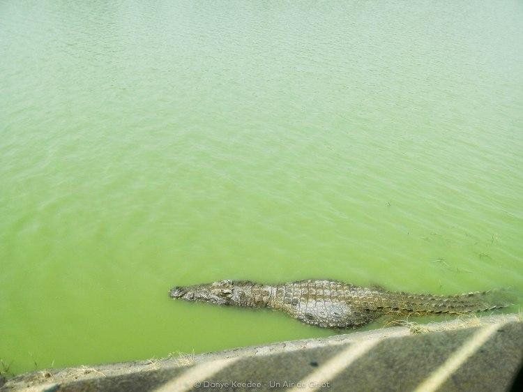 Lac aux caïmans, Yamoussoukro, Côte d'ivoire